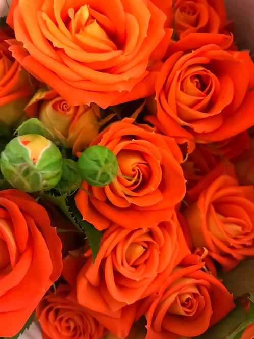 Роза Оранжевый Бриллиант