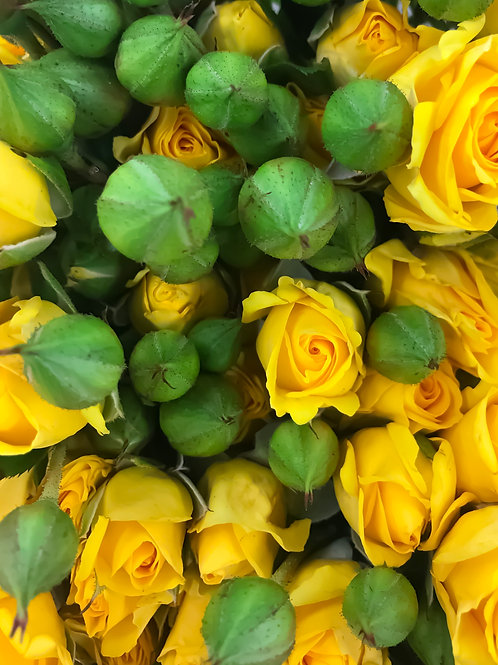 Роза Желтая Кустовая