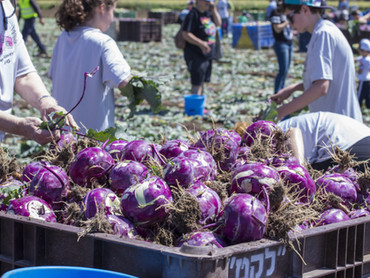Why Farmers are the Secret Ingredient to Ending Food Deserts