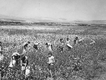 What is a Kibbutz, Anyways?