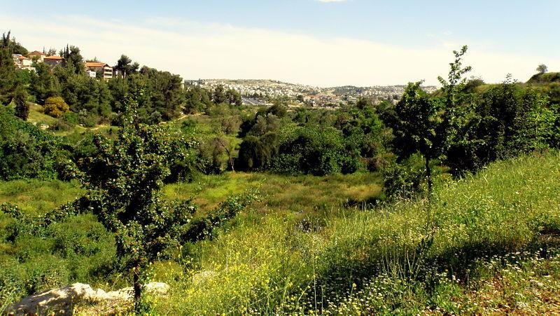 Gazelle Valley in Jerusalem
