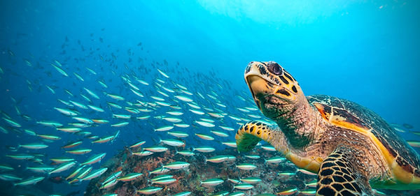 Turtles with fishes