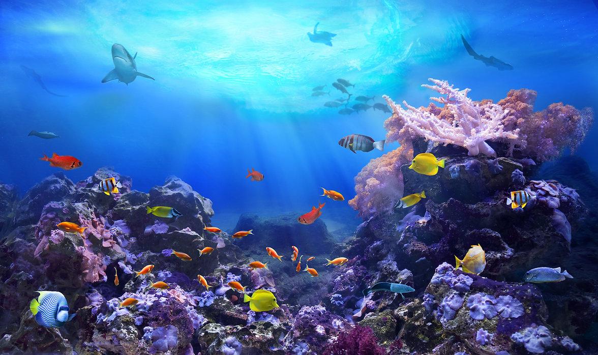 Ocean Marine Life