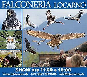 falconeria locarno_2019.jpg
