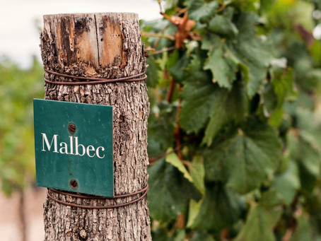 Si el Malbec fuera una persona, esta sería su historia
