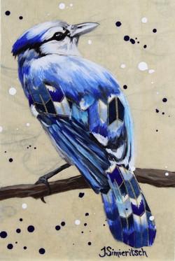 Little Portrait of a Bluejay