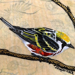 Cheeky Chestnut-sided Warbler