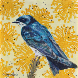 Cheerful Tree Swallow