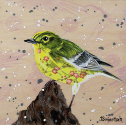 Party Pine Warbler