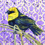 Yellowhead Blackbird_2_edited.jpg