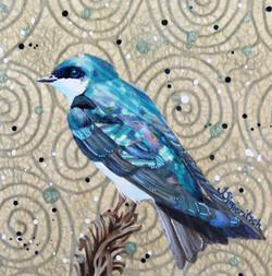 Tree Swallow in Blue