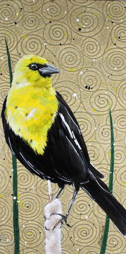 Balanced Yellow-headed Blackbird
