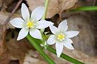 fleurs de bach 2.jpg