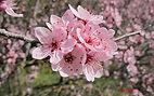 fleurs de bach 1.JPG