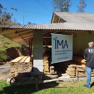 Operação combate extração ilegal de madeira em Doutor Pedrinho