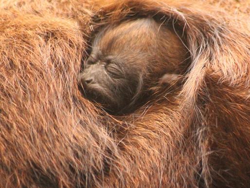 Zoo Pomerode registra  os primeiros nascimentos de 2021