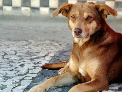 Sancionada lei que prevê controle populacional de animais domésticos em SC