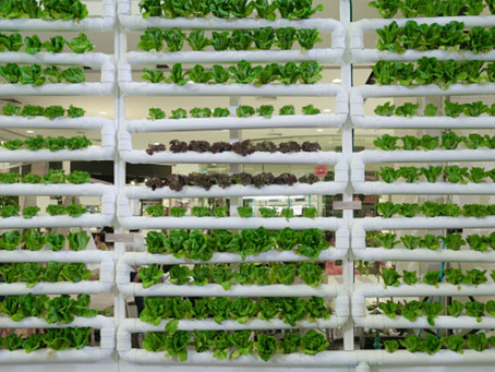 What are the Applications of AI in Vertical Farming?