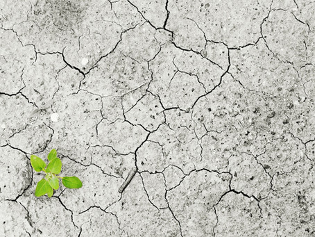 The Impact of Climate Change on Food Production