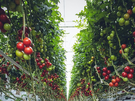 The Truth About Vertical Farms