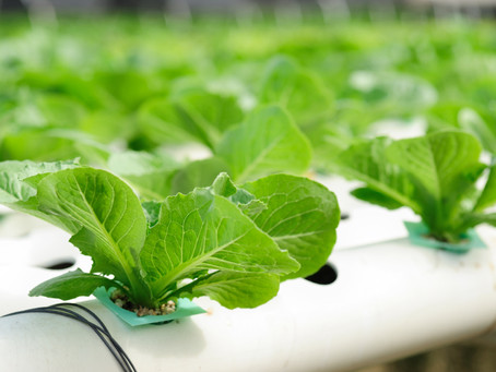 Vertical Farming - How to grow your own food tower