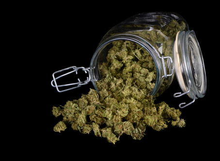 Cannabis:  The Law and Your Workplace