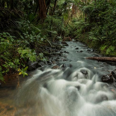 Keeping it fresh in NZ's streams…