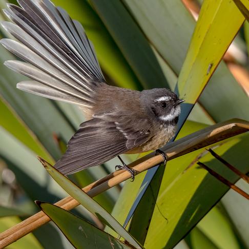 New Zealand - Land of Birds