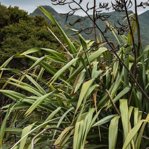 Matauranga Maori - Adaptations from our ancestors