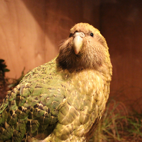 New Zealand's animal kingdom needs your help!