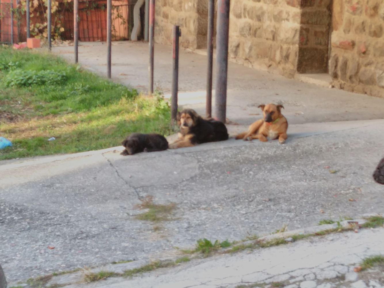 Cupko with friends