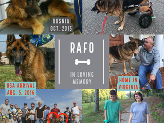 In Loving Memory: Rafo