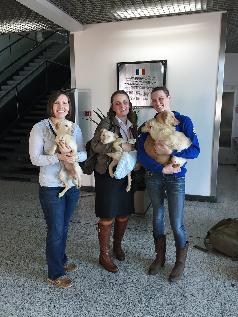 Simba, Sienna, Pippa, & Freya leaving Sarajevo thanks to Puppy Rescue Mission