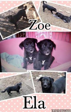 Zoe&Ella