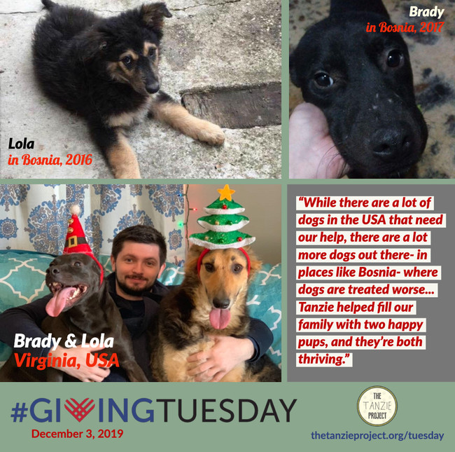 Brady & Lola of Bosnia