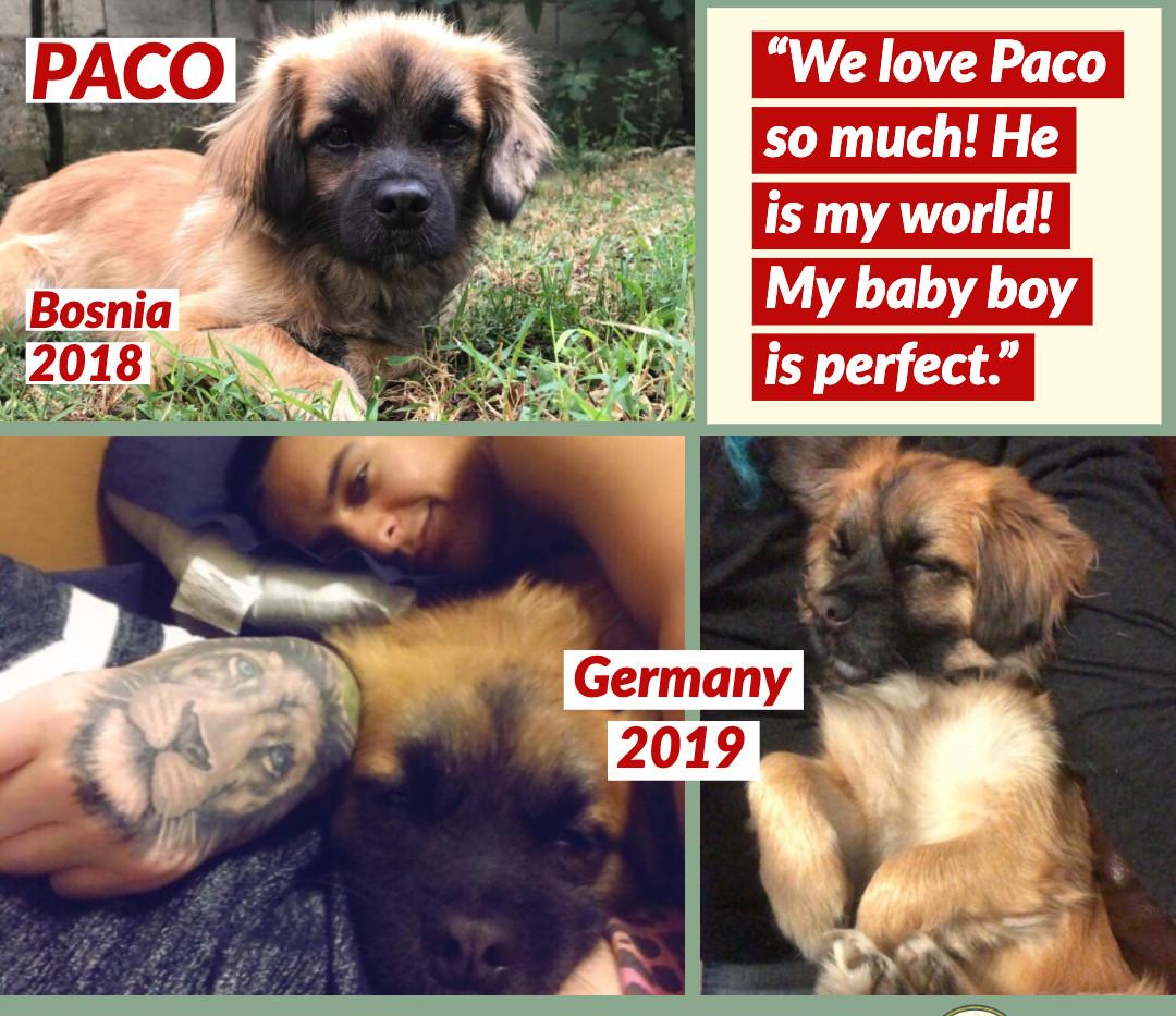 Paco GT 2019.jpg