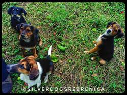 Secerlama with Friends