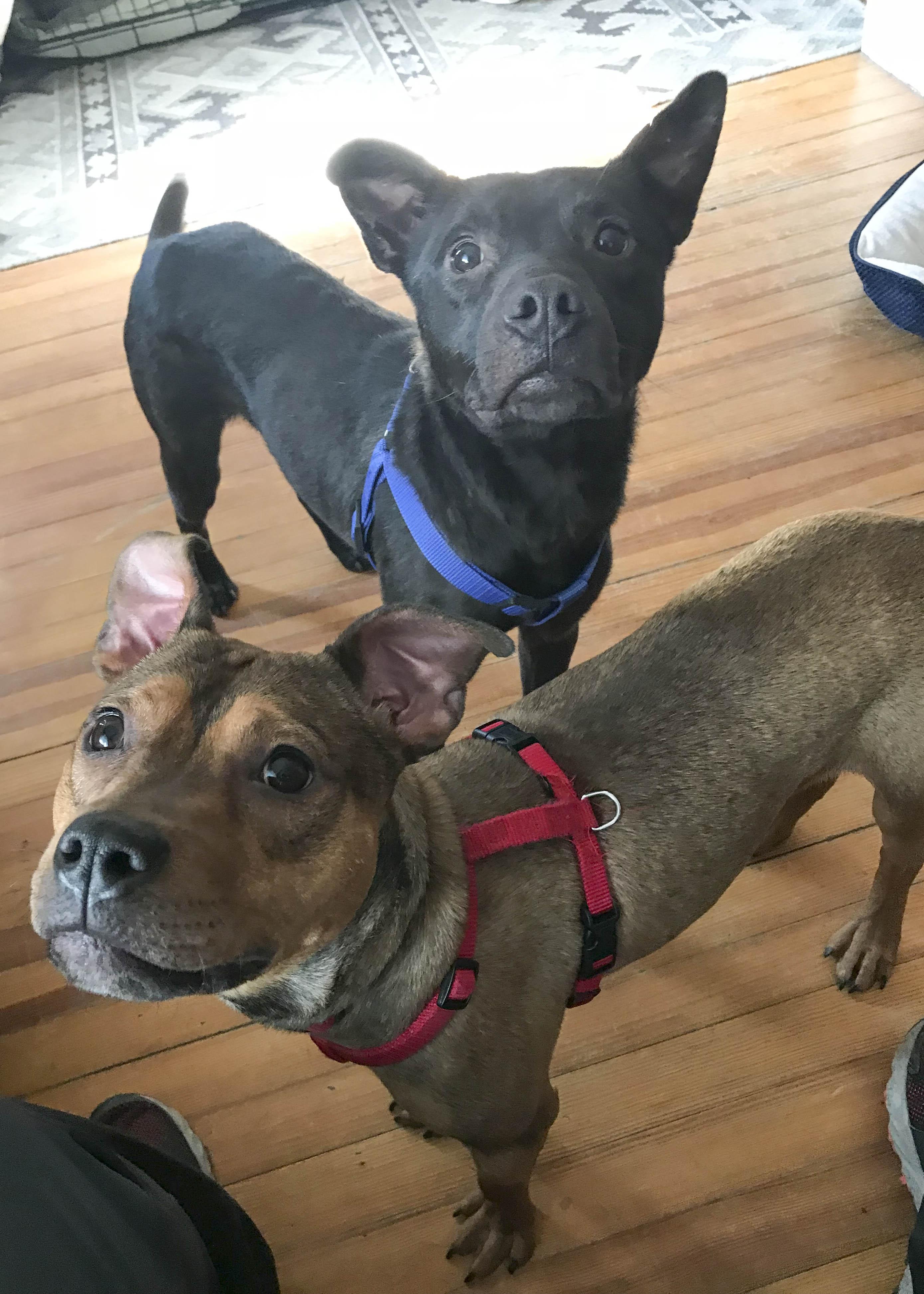 Daisy & Brady - USA