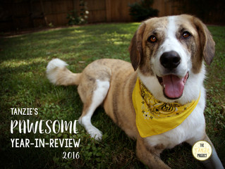 Tanzie's PAWESOME Year in Review!