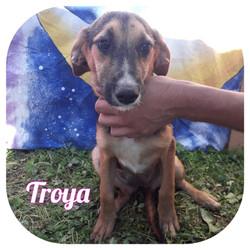 Troya - Europe