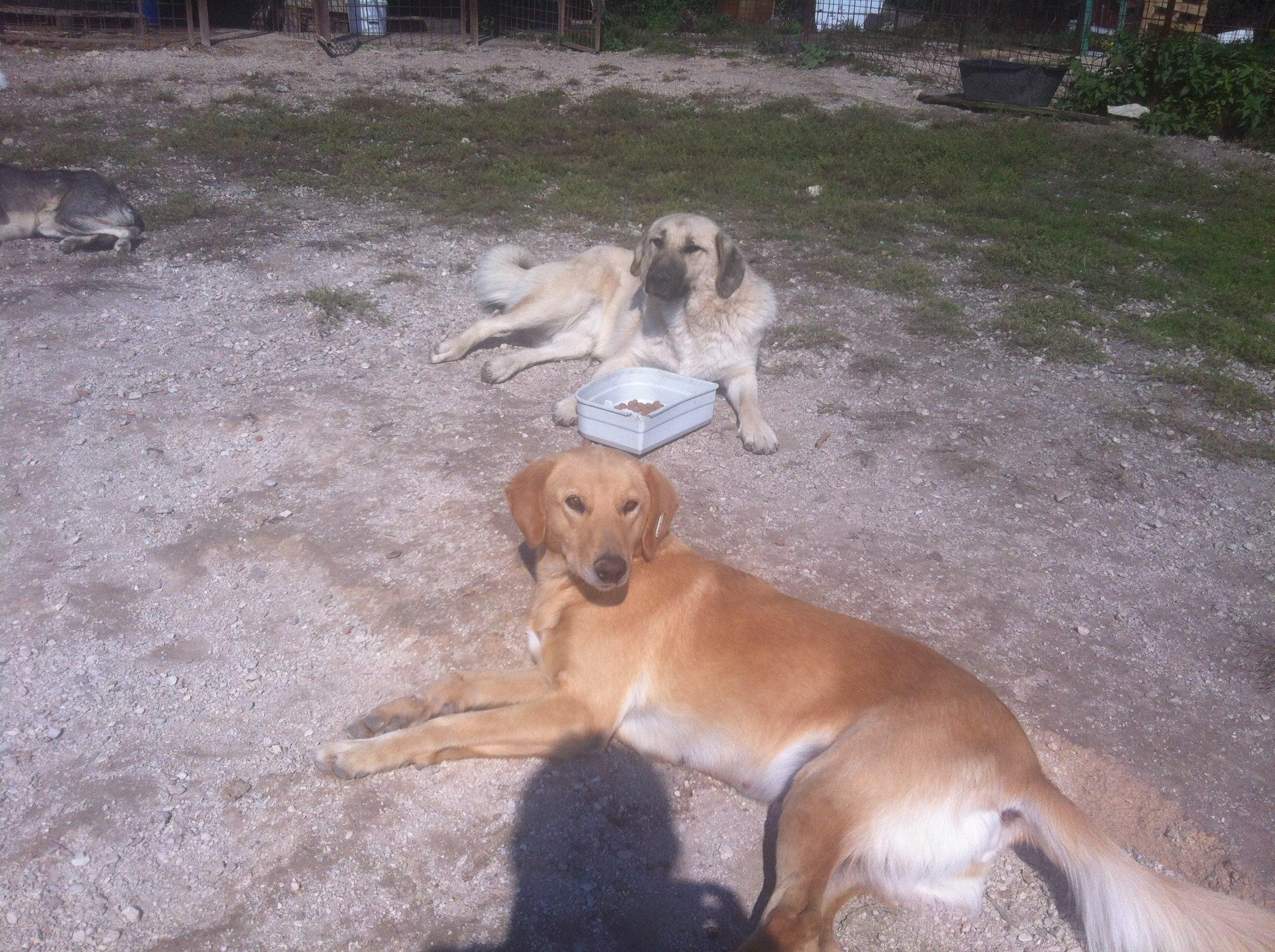 Bjela & zuja -best friends