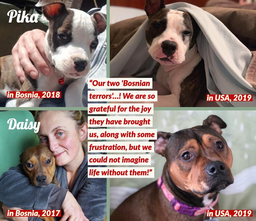 Pika & Daisy of Bosnia