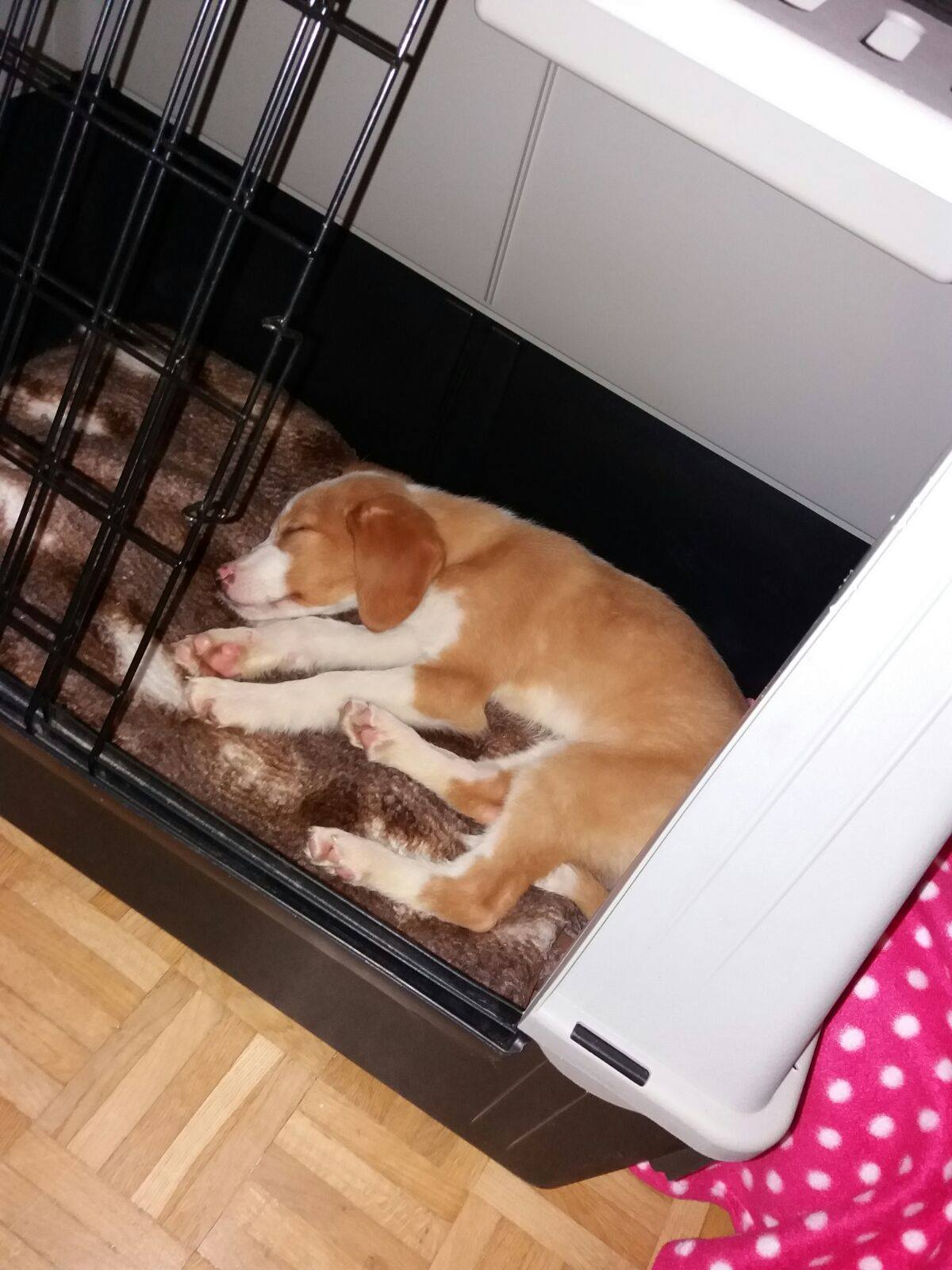 Girl Pup 3 - Austria