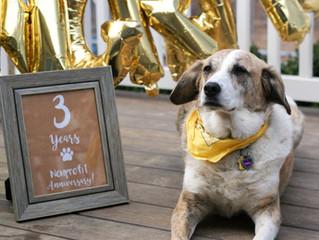 Tanzie celebrates 3 years of saving Bosnian strays!