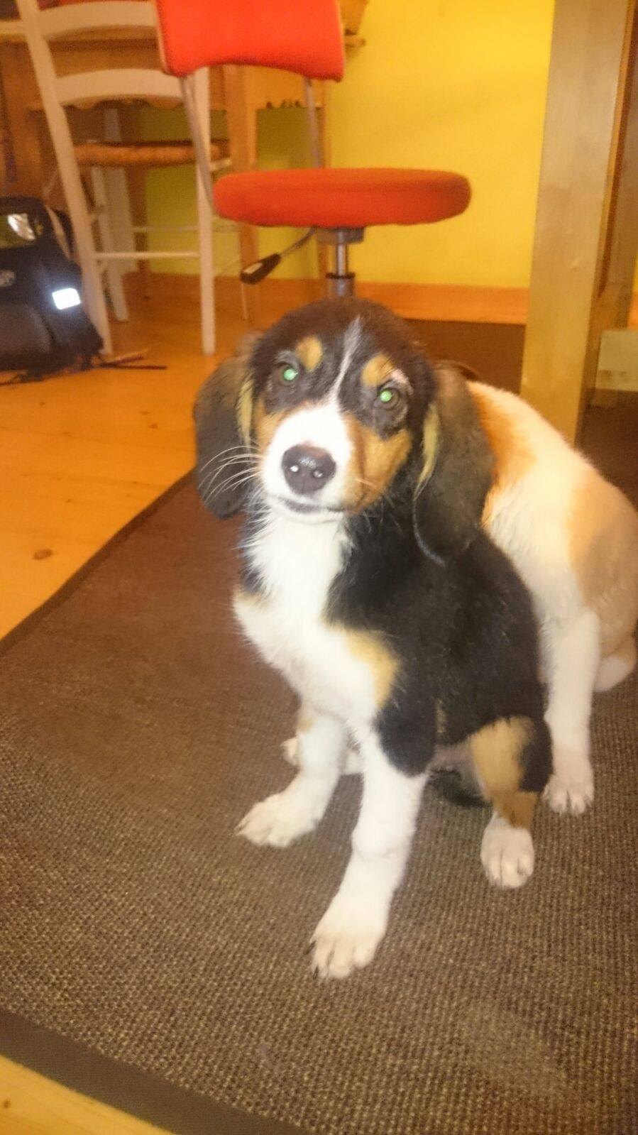 Girl Pup 4 - Austria