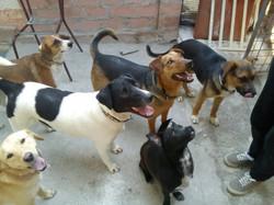 Dzeki with friends at shelter