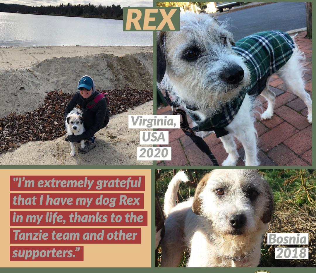 Rex of Bosnian 2020