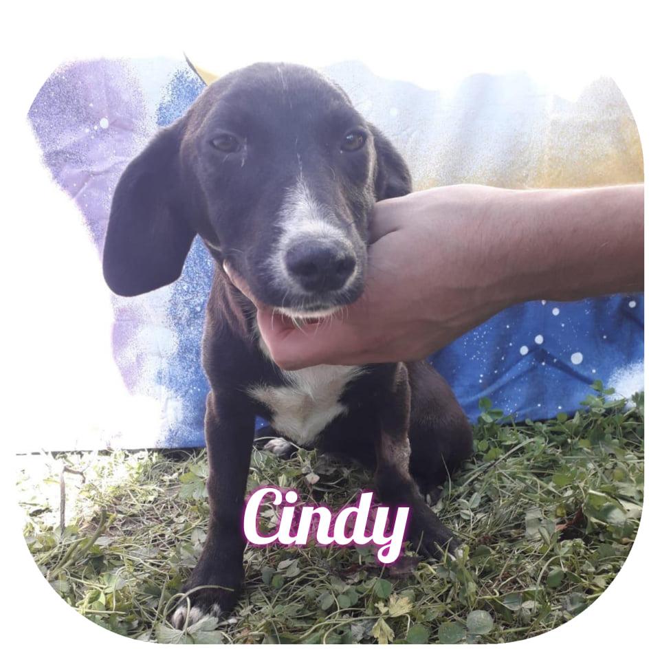 Cindy - Europe