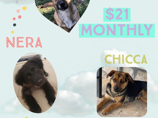 Just $21 can save a dog's life