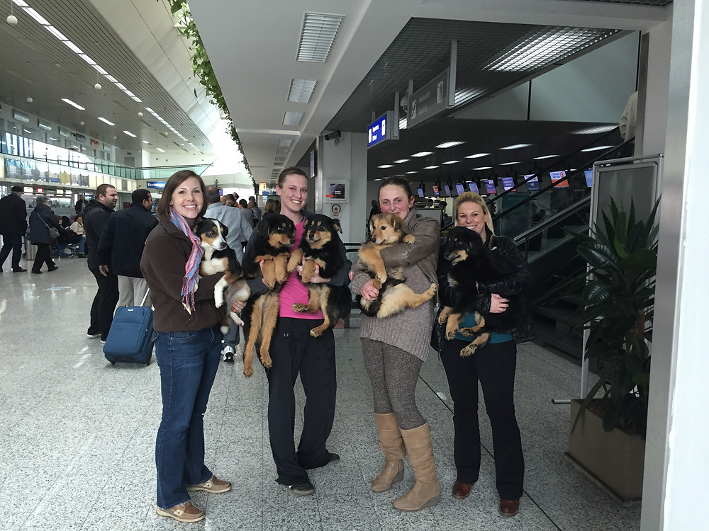 Max, Bazzi, Reese, Kiara, & BooBoo leaving Sarajevo thanks to Puppy Rescue Mission